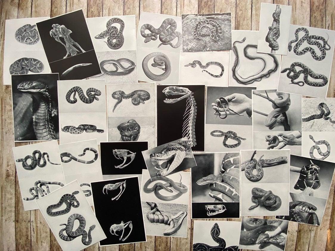 ephemera, snakes , creepy, skeleton
