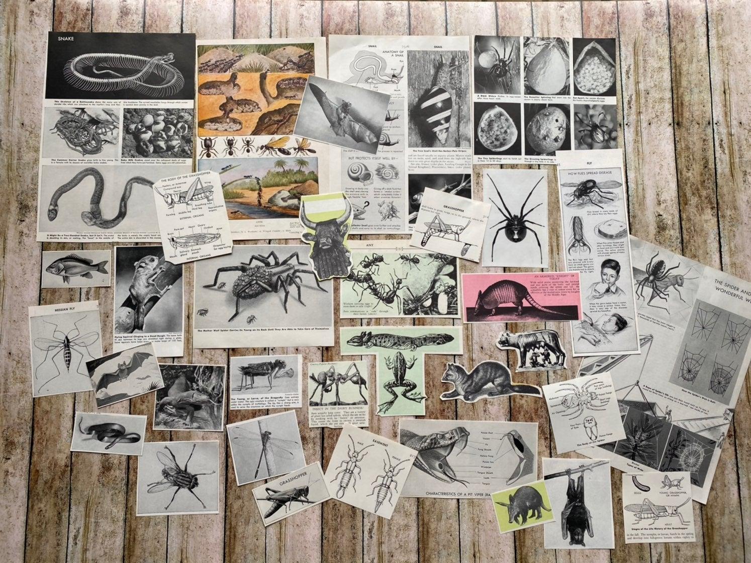 ephemera, vampire bats, rats, spider