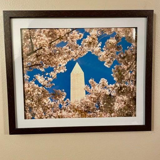 Washington DC Cherry Blossom Print