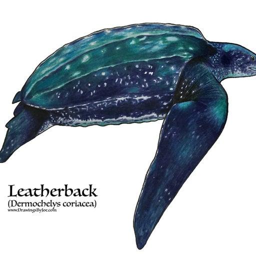 Leatherback Sea Turtle Illustration