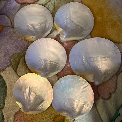 Mother of Pearl appetizer Shell plates  (6)